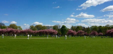 Cricket on the Meadows