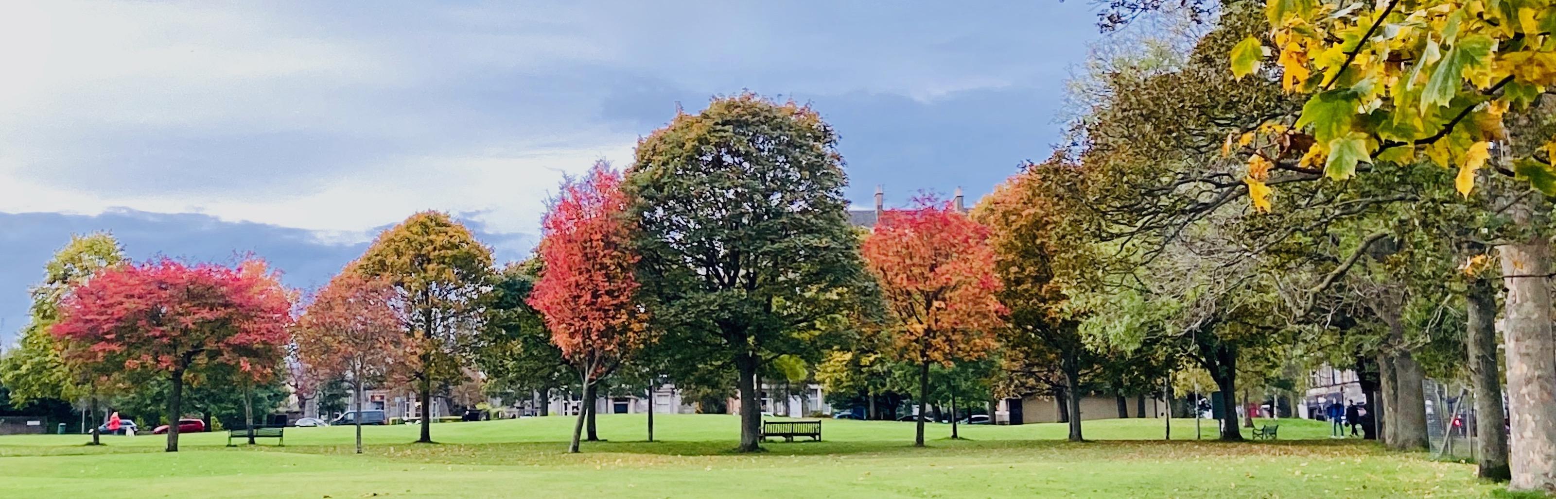 autumn, trees, bruntsfield